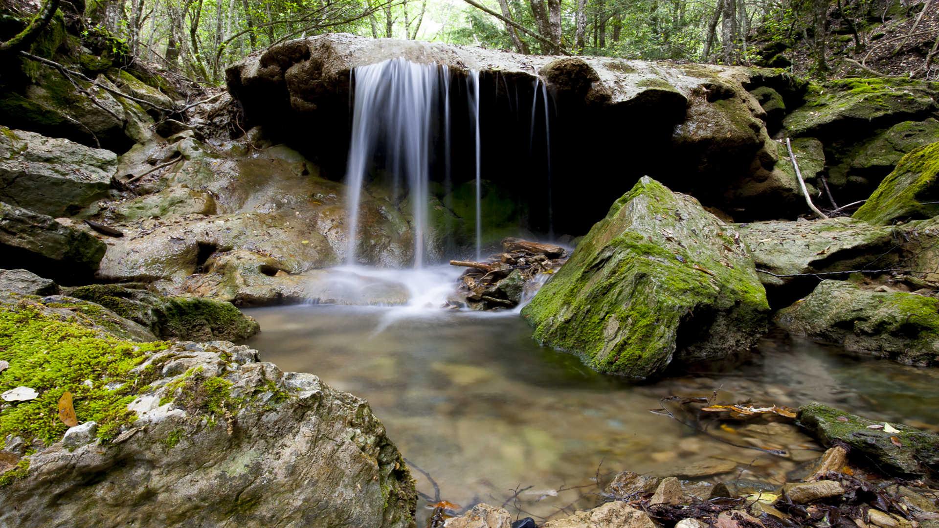 Montarbu sardegnaturismo sito ufficiale del turismo for Pianta della foresta di pioppo