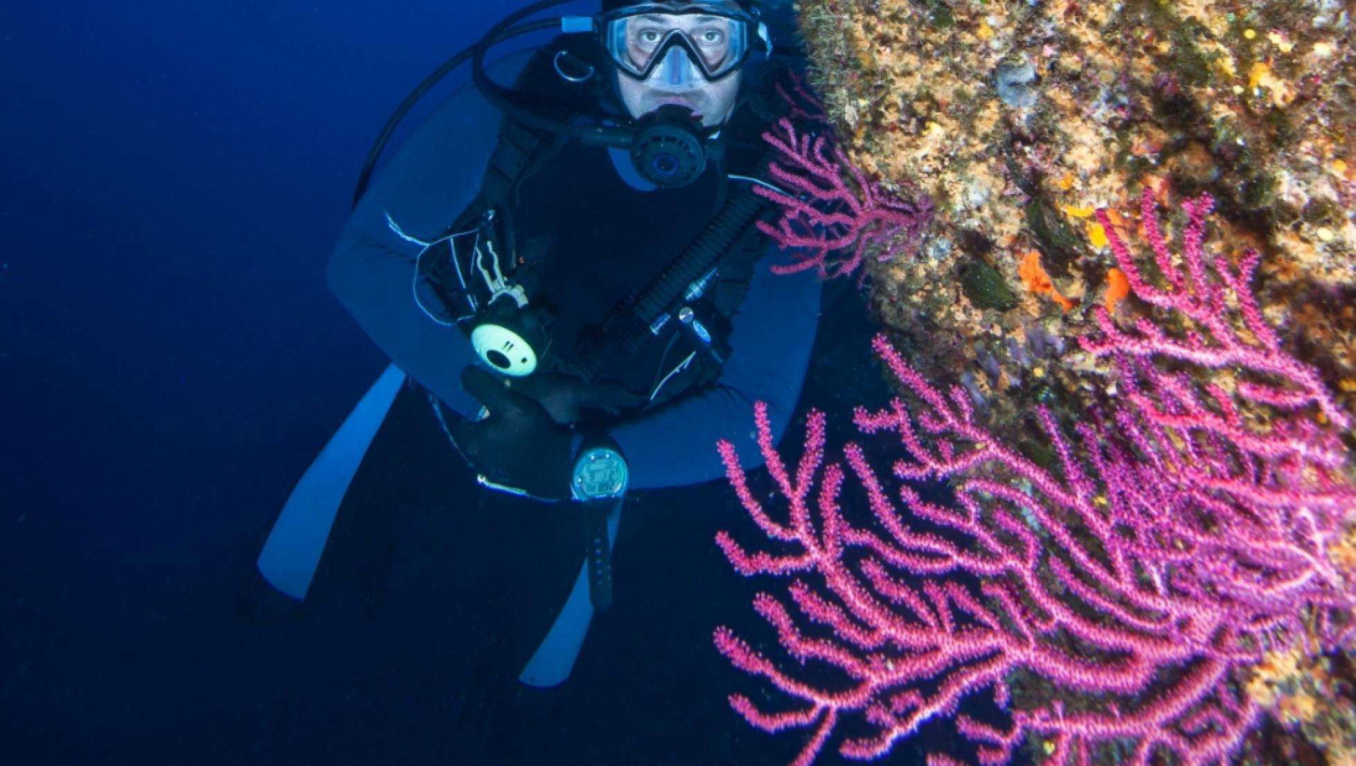 diving - immersione in parete