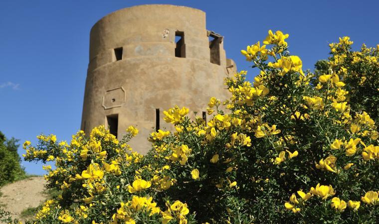 Tertenia, torre Sarrala