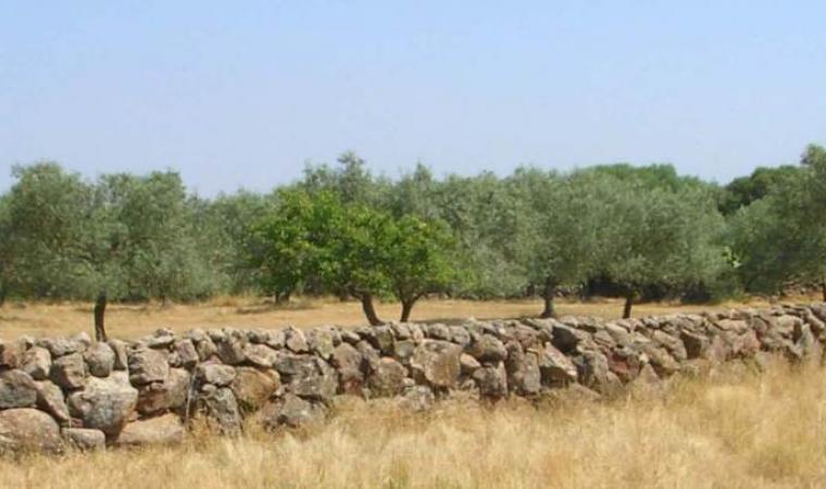 Habitat media Valle del Tirso Comune Suni