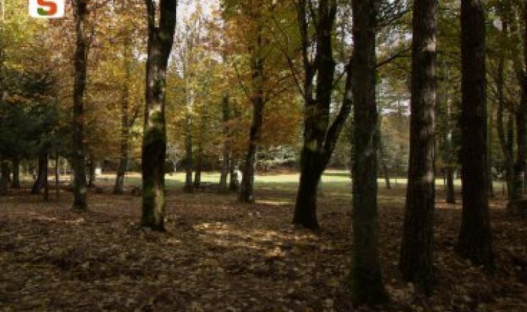 Titolo: Foresta di Anela Autore: Chiaramida Antonello