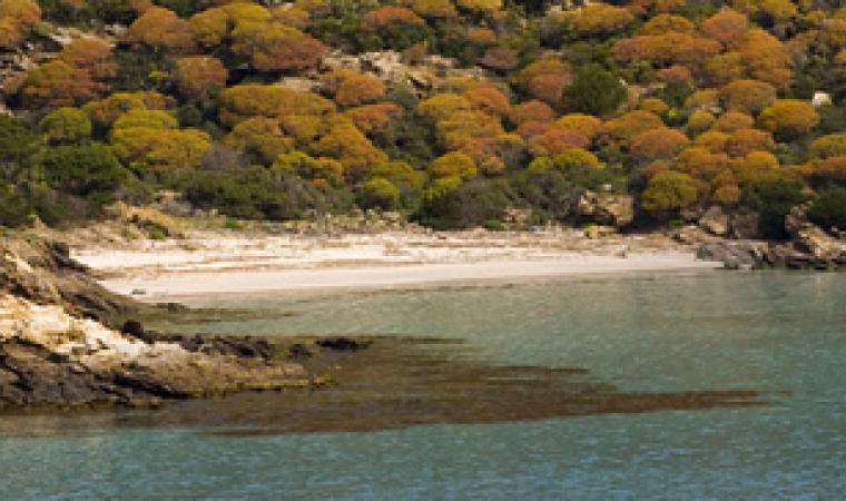 Asinara, spiaggia di Cala d'Arena