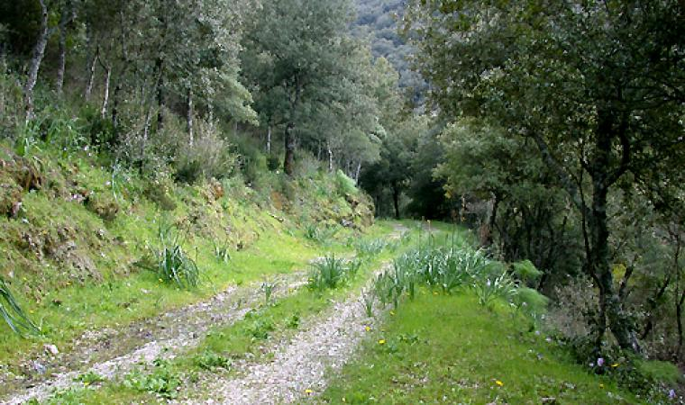 Foresta Uatzo - Belvì