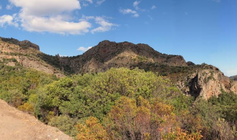 Monte Nieddu, foresta