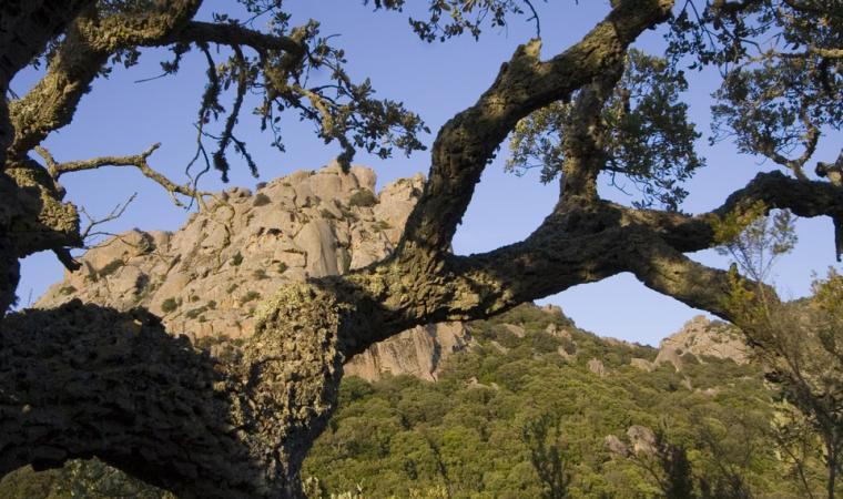 Mountainous, Neoneli; Neoneli, Rilievo montuoso