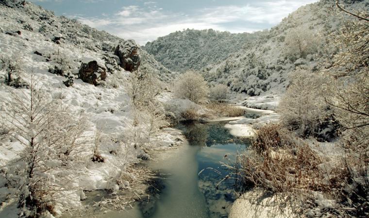 Foresta di Monte Lerno innevata - Pattada