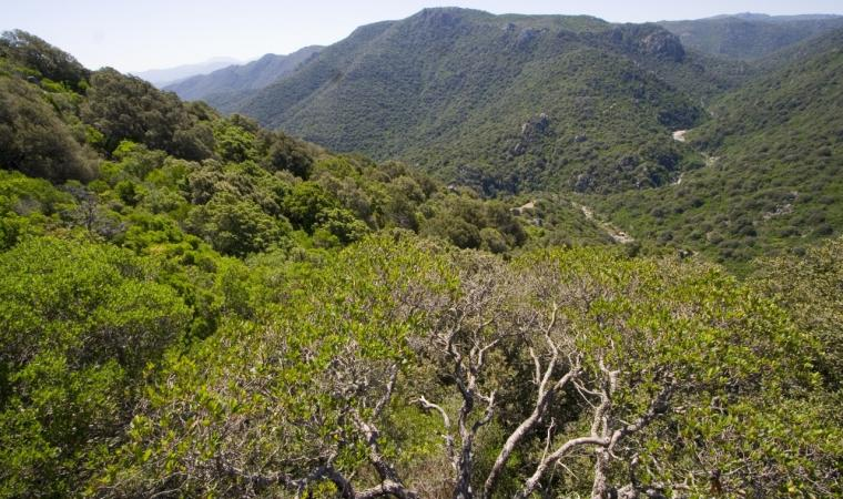 Bitti, foresta demaniale Sos Littos; A panoramic view of the forest of Sos Littos - Sas Tumbas