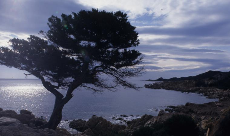 Siniscola, la scogliera di Capo Comino; The reef of Capo Comino, Siniscola