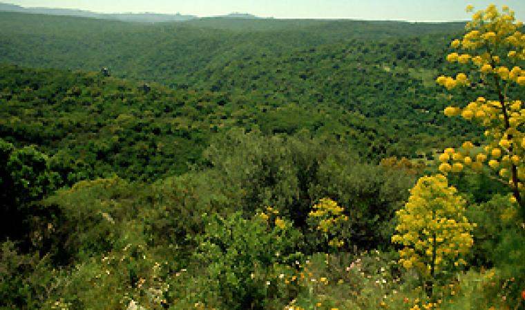 foresta bolostiu ala dei sardi