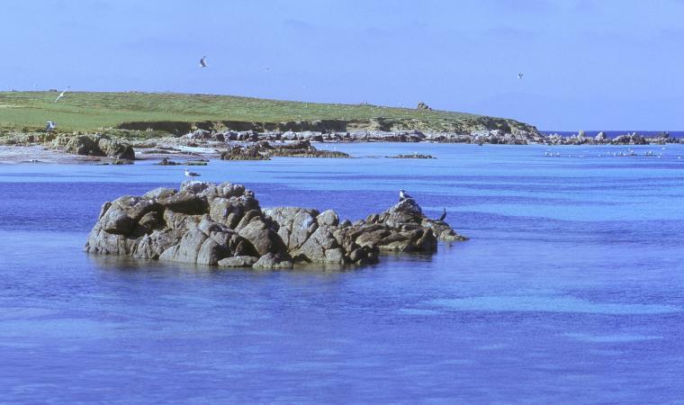 Isola Mal di Ventre,  cala Saline
