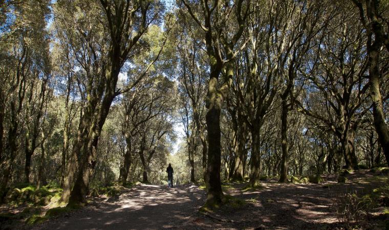 Sentieri dell'Ossidiana - Pau