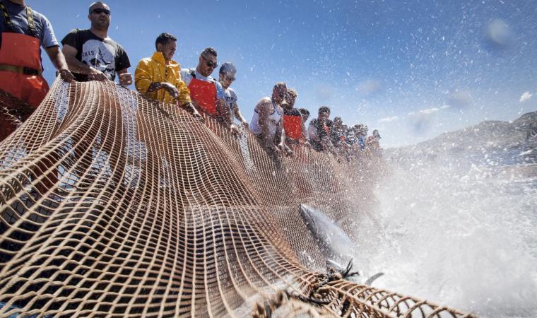 Mattanza dei tonni - Portoscuso
