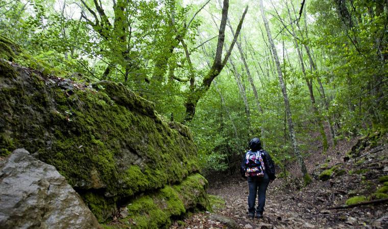 Montarbu, foresta