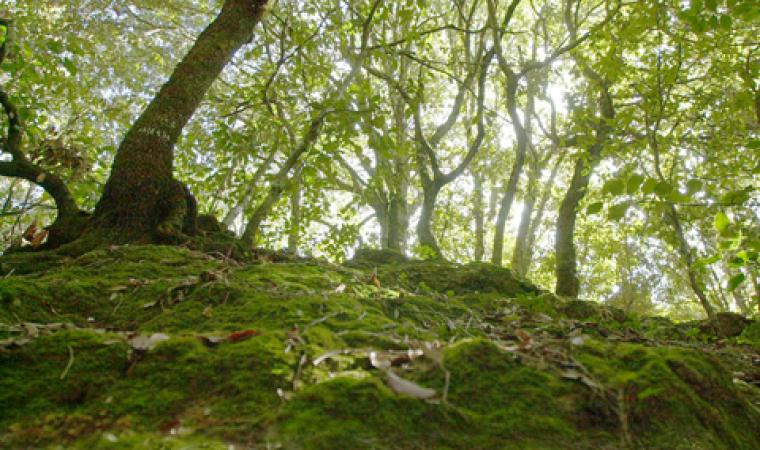 Foresta Marganai - Sulcis-Iglesiente