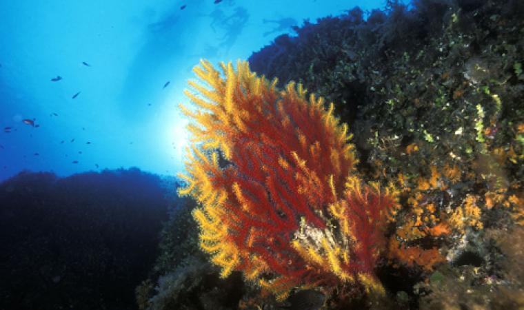 Fondali - Area Marina Protetta Tavolara - Punta Coda Cavallo