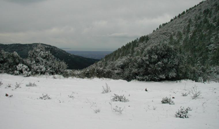 Parco del Monte Arci, innevato