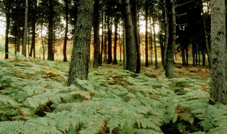 Montes, foresta