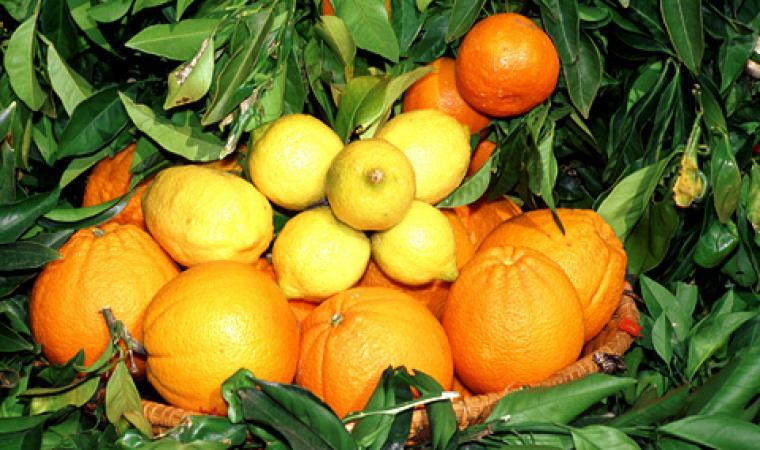 Sagra delle arance - Muravera
