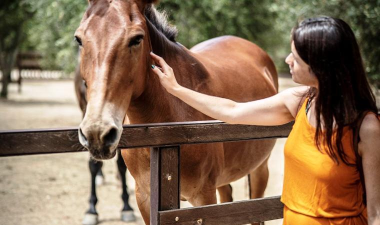cavallo - parco s'Abba Frisca - Dorgali