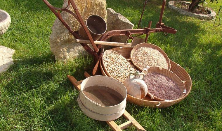 Esposizione di legumi - Las Plassas