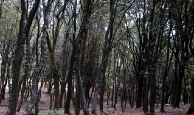 Foresta demaniale di san Pantaleo