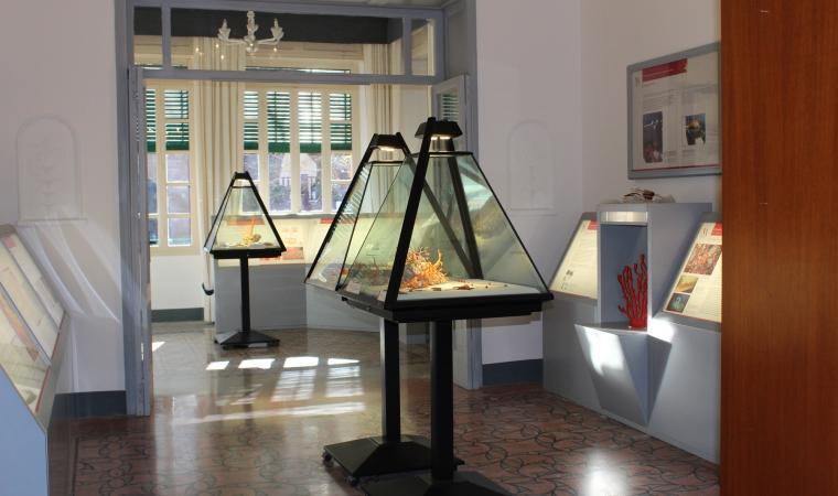 Museo del Corallo - Alghero