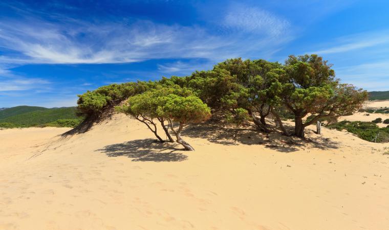 Dune di Piscinas - Arbus