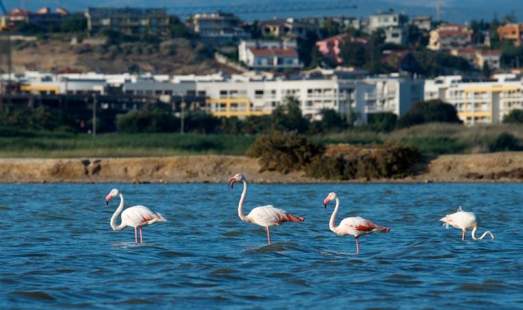 Parco naturale di Molentargius, stagno e fenicotteri - Cagliari