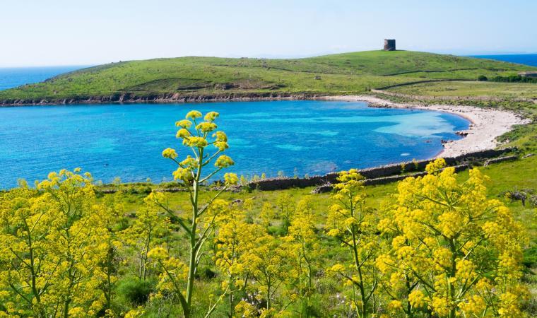 Parco Nazionale dell'Asinara, in primavera - Stintino