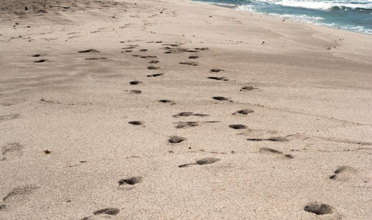 Penisola del Sinis, Spiaggia - Oristano