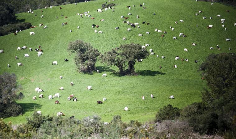 Paesaggio pastorale - Gennargentu