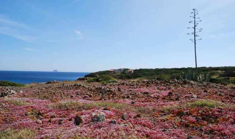 Isola di Sant'Antioco