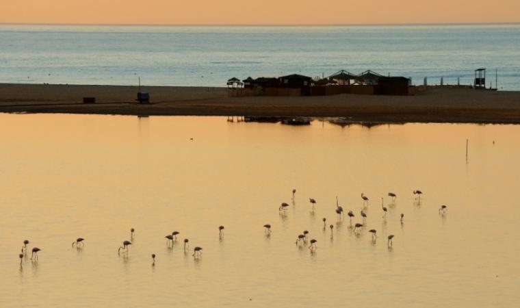 Fenicotteri al tramonto - San Teodoro