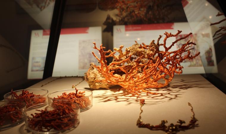 vetrina - Museo del Corallo