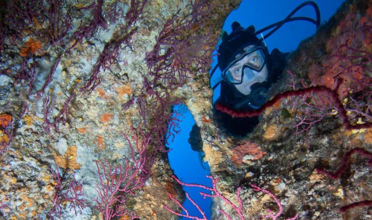 shutterstock_323642573_diving_frantisekhojdysz