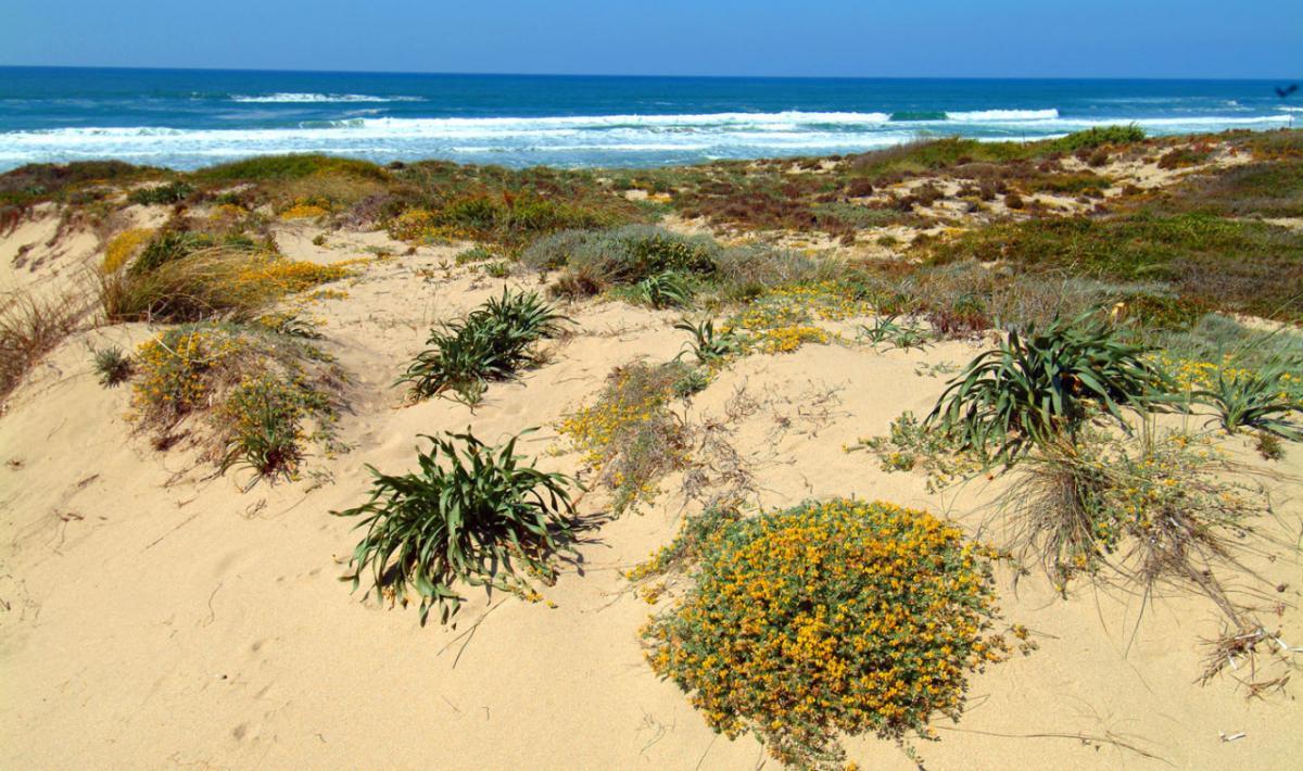 Vegetazione costiera di Baia delle Mimose; Coastal vegetation in Baia delle Mimose
