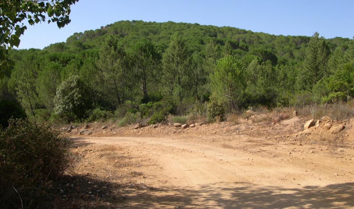 Monti, foresta di Monte Olia; Monti, the forest of Monte Olia; Monti, Wald von Monte Olia