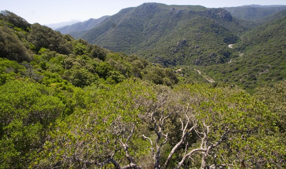 Bitti, foresta demaniale Sos Littos; A panoramic view of the forest of Sos Littos - Sas Tumbas