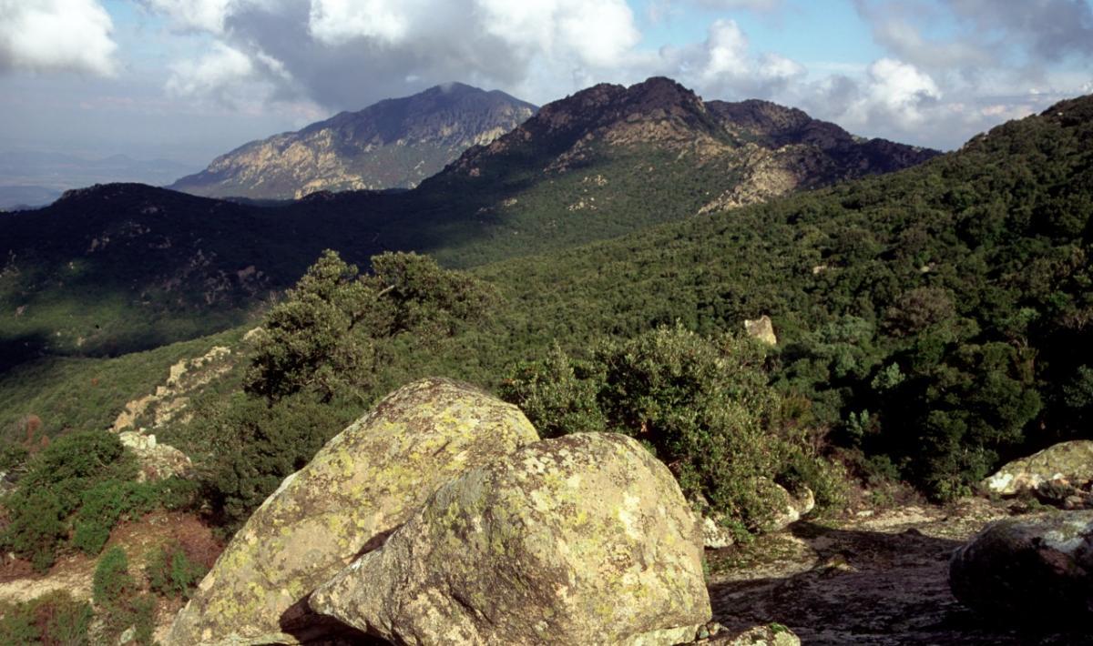 Monte Arcosu - Oasi del WWF