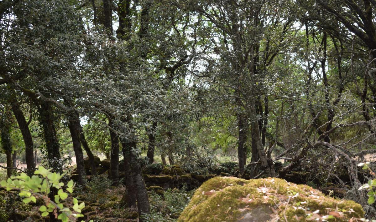 Foresta Burgos - Ozieri