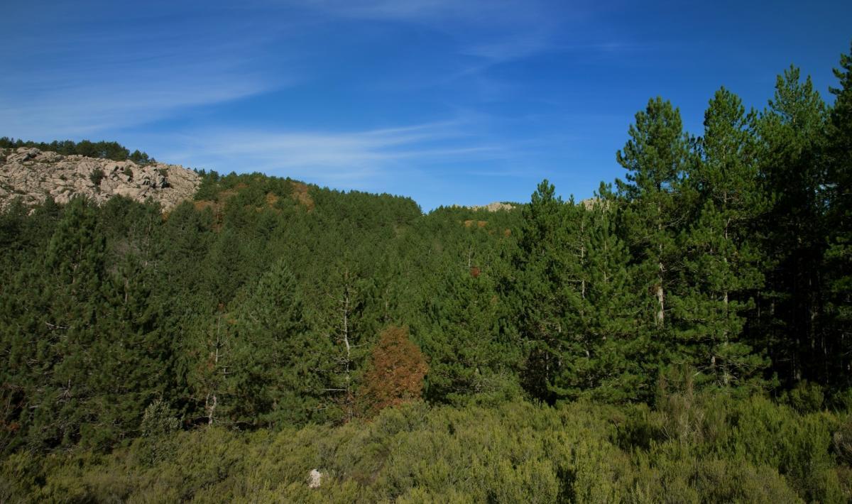 Monte di Limbara