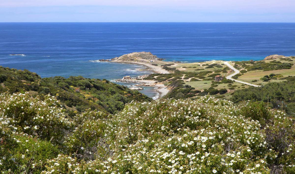 Capo Pecora - Arbus